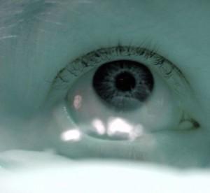 piilolinssit-netista-tumma-silma